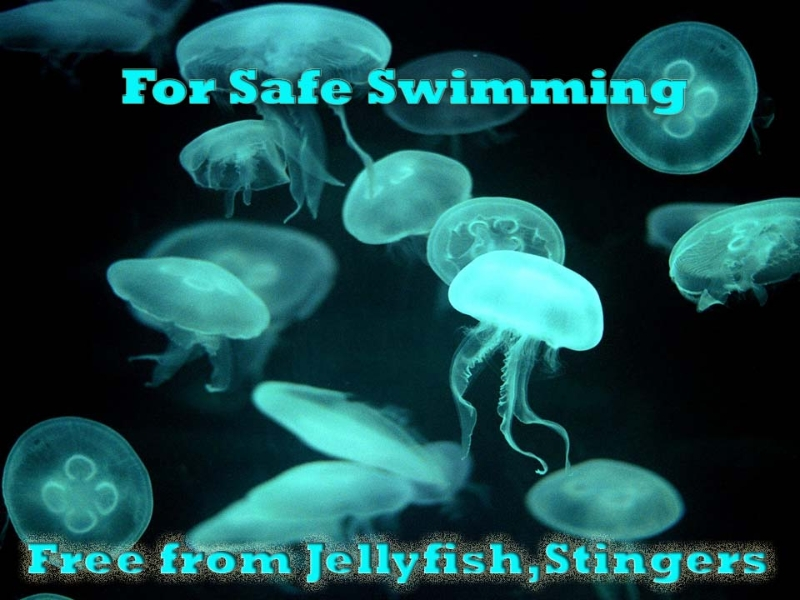 Jellyfish Protection best x 1-copy